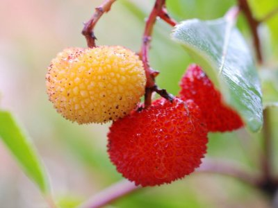 I fruti