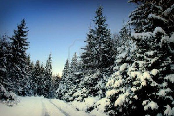 ~1~        Summer Snow