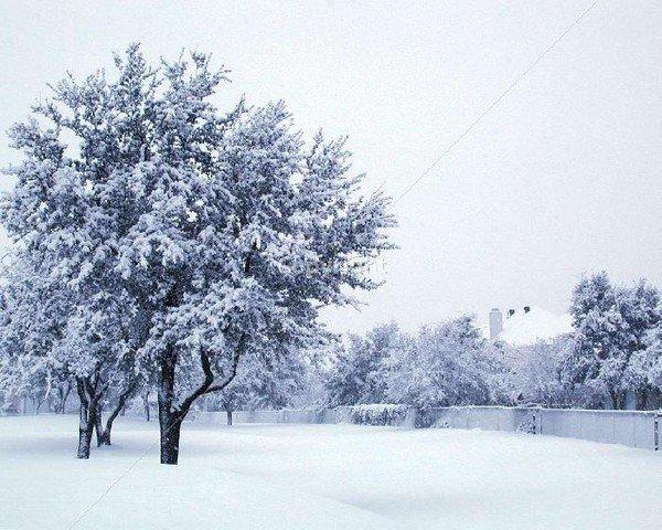 ~3~    Summer Snow