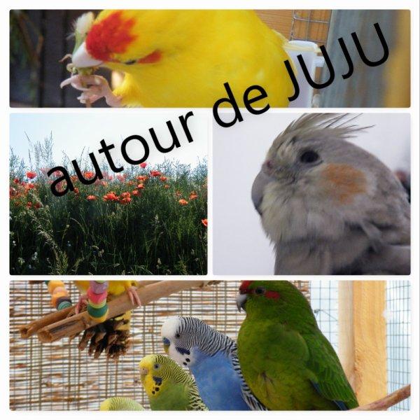 Autour de JUJU : animaux nature et découverte