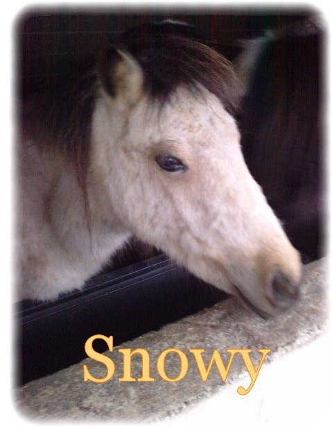 Snowy <3