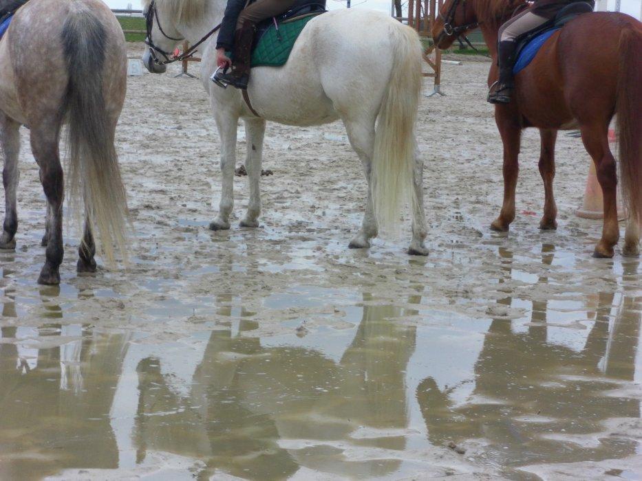 Blog de centre-equestre-des-jonc