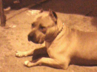 just olga my agreable dog