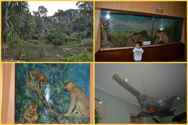 Jardin botanique de Bogor