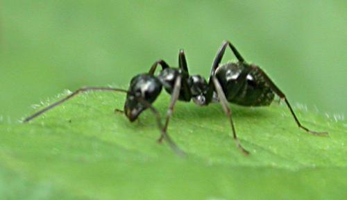 Va vers la fourmi