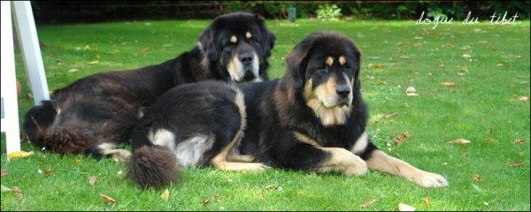 ♦ Bienvenue sur Info-Canine: Le blog information pour les passionnées et les futurs passionnées.