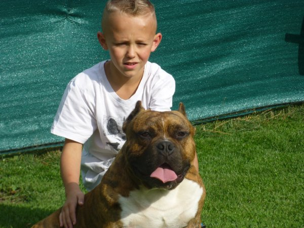 chiots American Bully disponible de suite