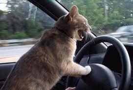 un chat conduit