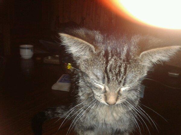 le ptit chat que j'aime