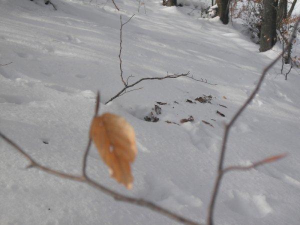 Ma Balade en forêt......♥