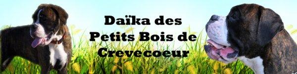 Bannière Daika