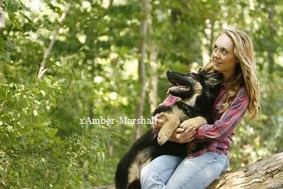 I love animal .