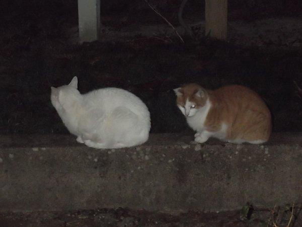La nuit tous les chats sont gris.