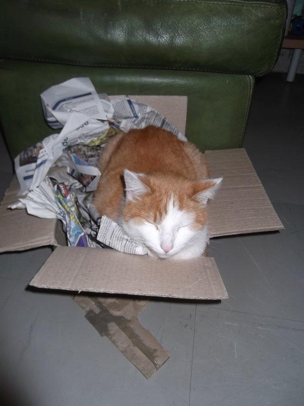 Du recyclage des cartons