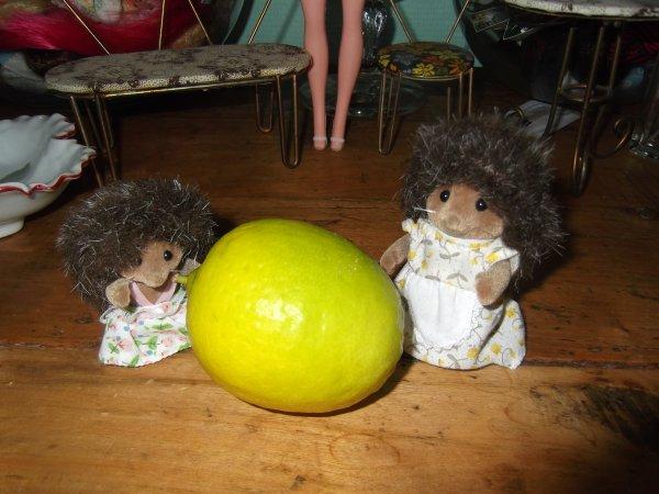 Premier citron vert