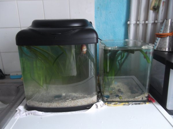 Réfection aquarium, c'est normal en ce début d'année.