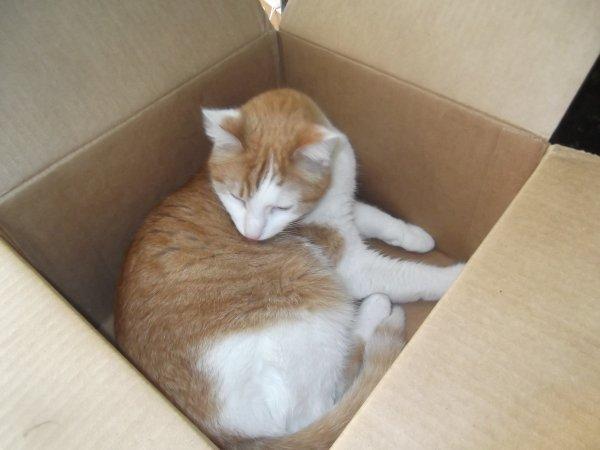 Le chat et le carton