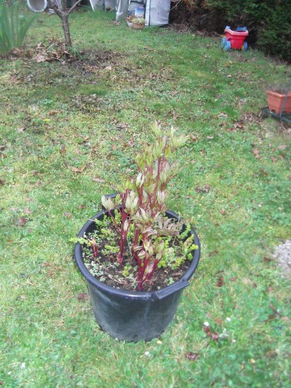 Le jardin revit, les pots aussi.