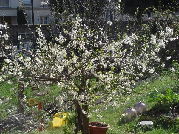 Jardin sous le soleil