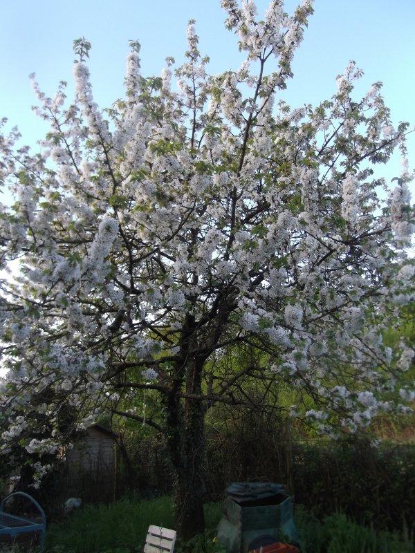 Autres floraisons
