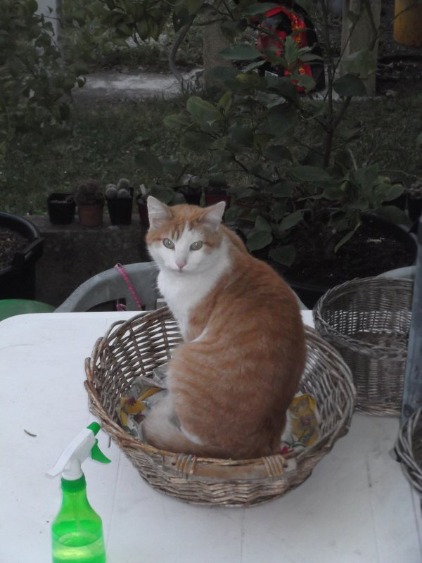 Paniers à chats? Chats à paniers???