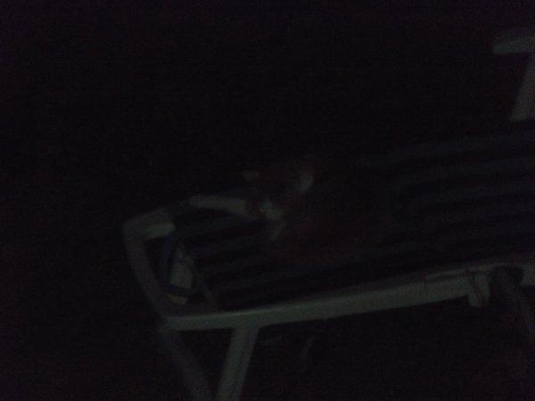 La nuit, tous les chats sont...Invisibles???