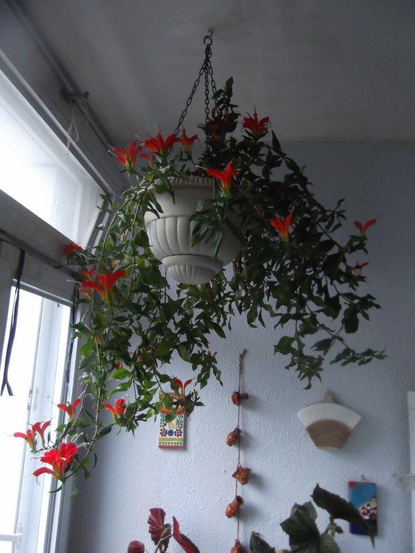 """La plante """"atchoum"""" favorite des blogueuses..."""