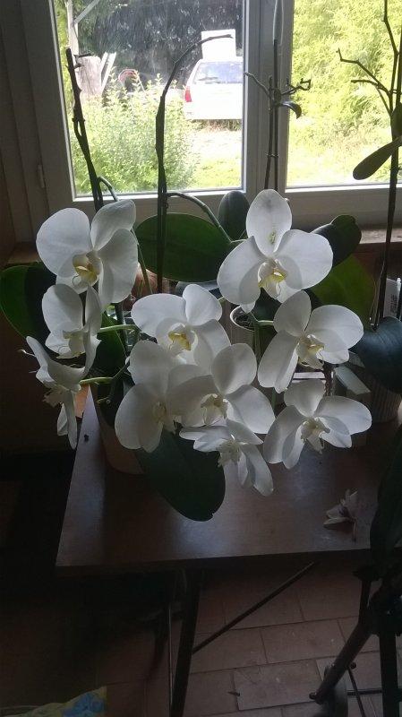 Des orchidées magiques
