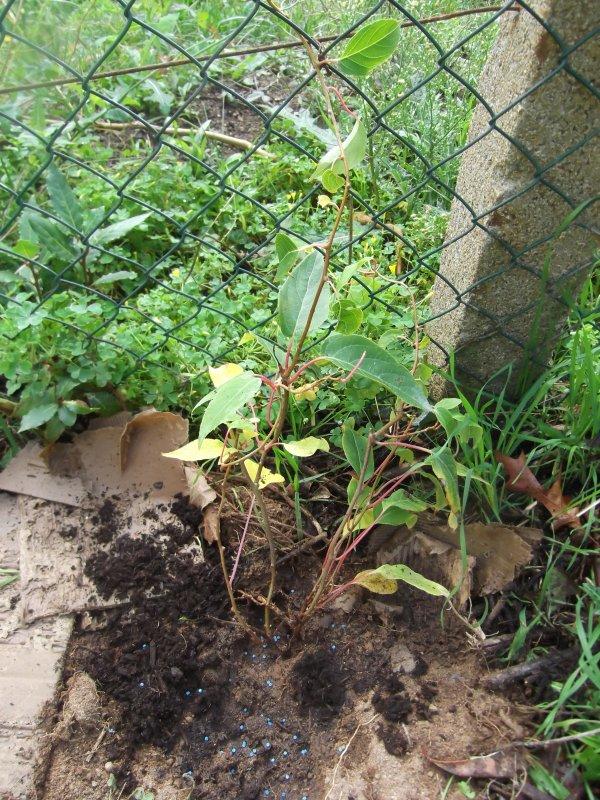 Grand soleil aujourd'hui, jardinage, plantations! Photos bien sûr!!