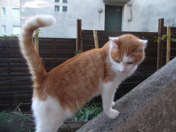 Et un escort-cat au jardin, un!!