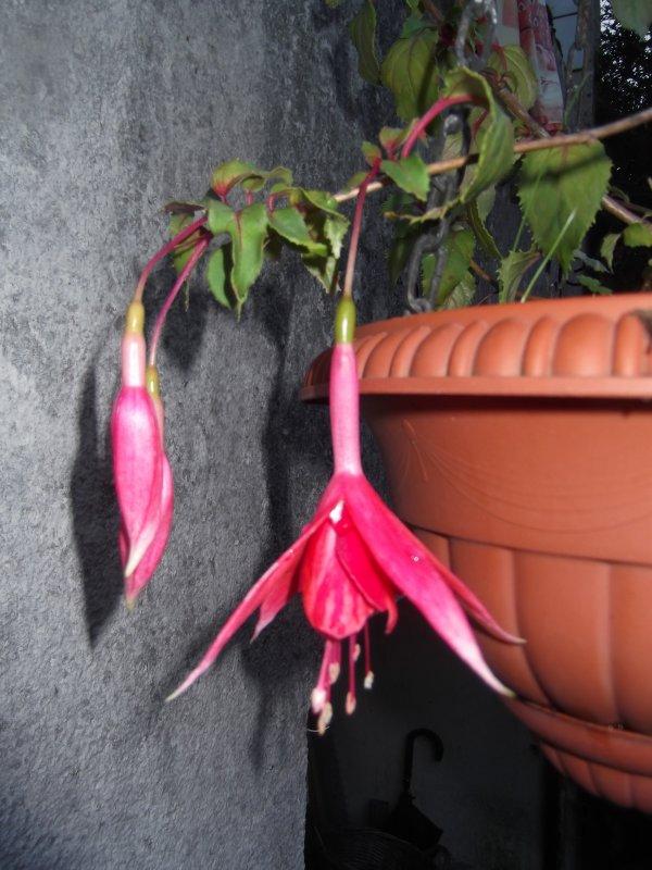 Encore des fleurs avant les grands froids...