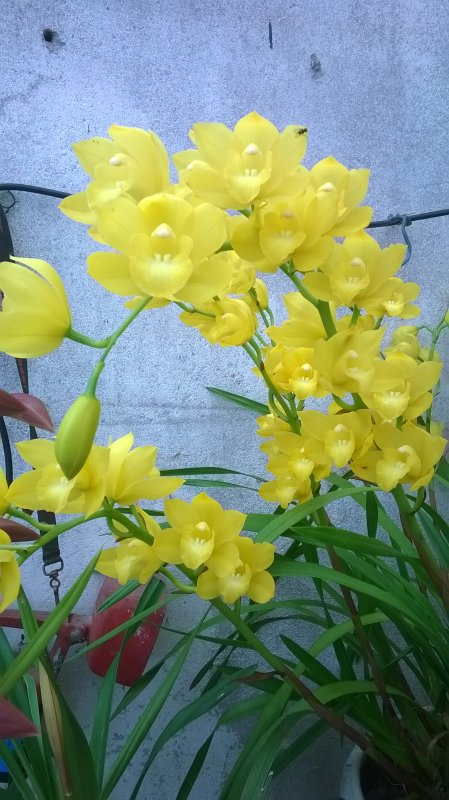 Orchidées d'hiver