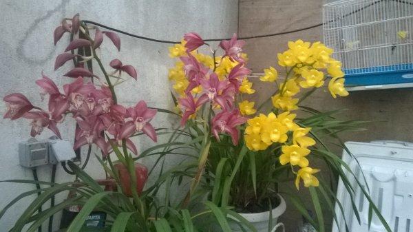 Orchidée, seconde!