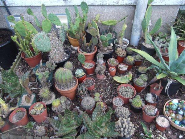 Cactus à tous les étages