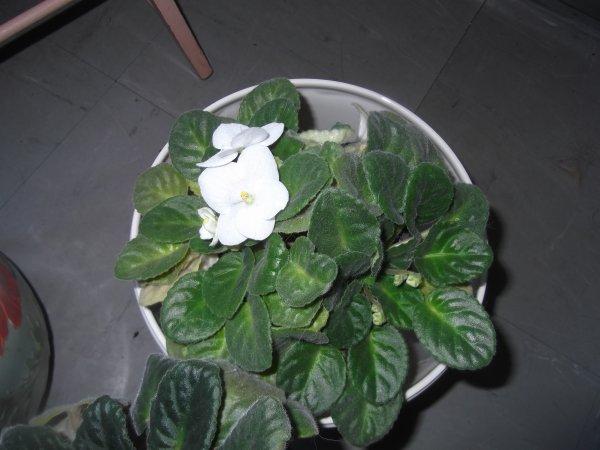Floraisons colorées