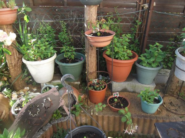 Alors qu'un déluge s'abat sur le jardin...