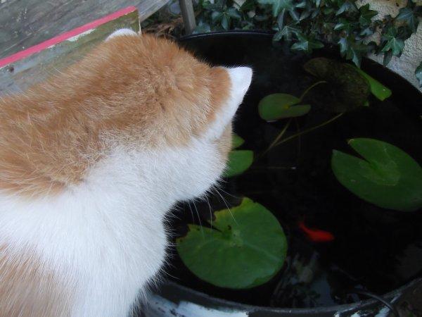 A la pêche aux poissons rouges, je n'ai pas le droit, maman...