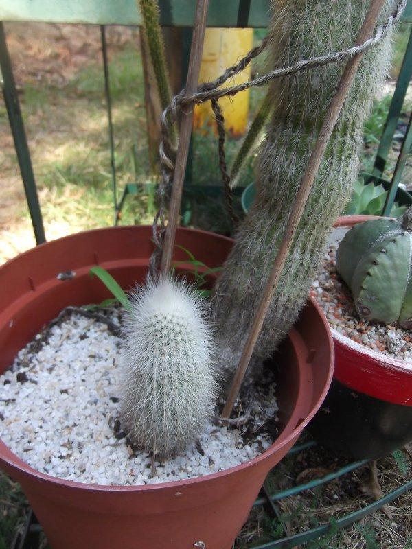 Bébé cactus, après des années, je vous annonce la naissance de ...