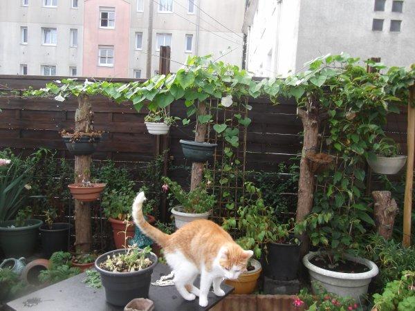 Toujours au jardin