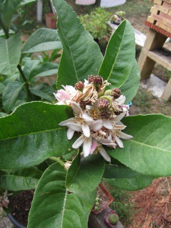 Je profite du parfum de fleurs d'oranger sur la terrasse