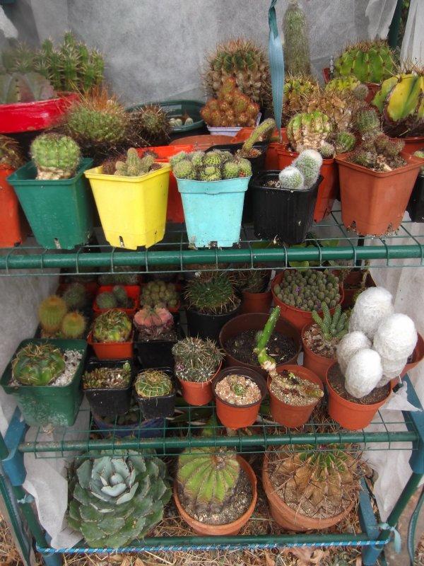 Journée jardinage