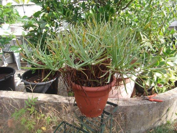 Quelques plantes très différentes