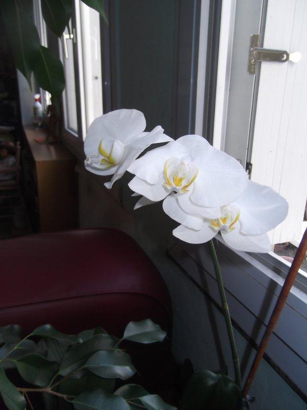 Orchidées, le retour