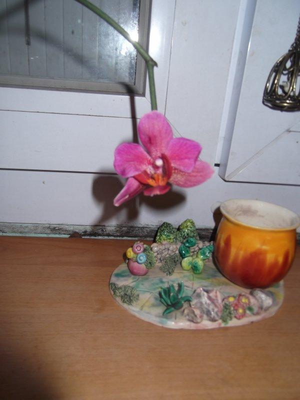 Floraison du keikis
