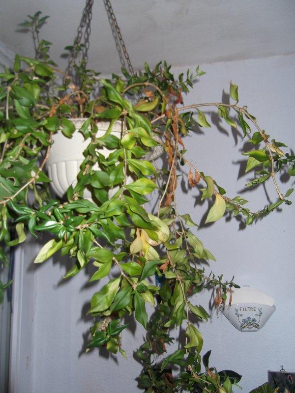 Mes plantes atchoum