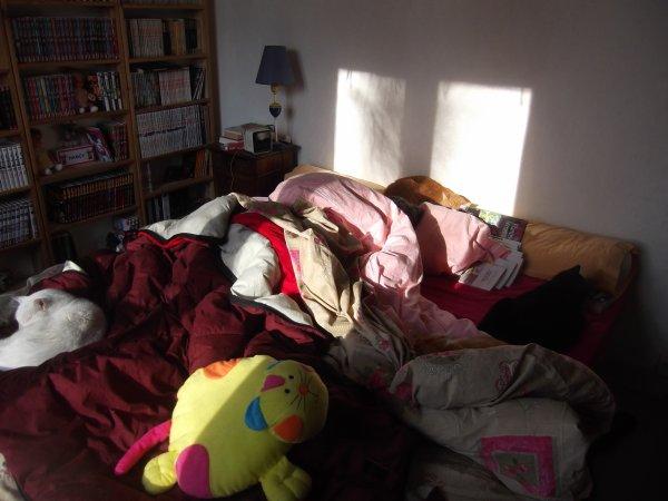 Quatre chats sur mon lit, qui est le faux chachou?