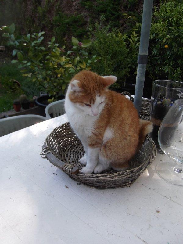 Chat, chats, chachou, chachoux, on conjugue en terrasse!