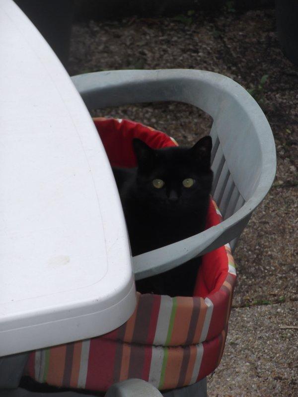 Chat noir! Chat blanc???