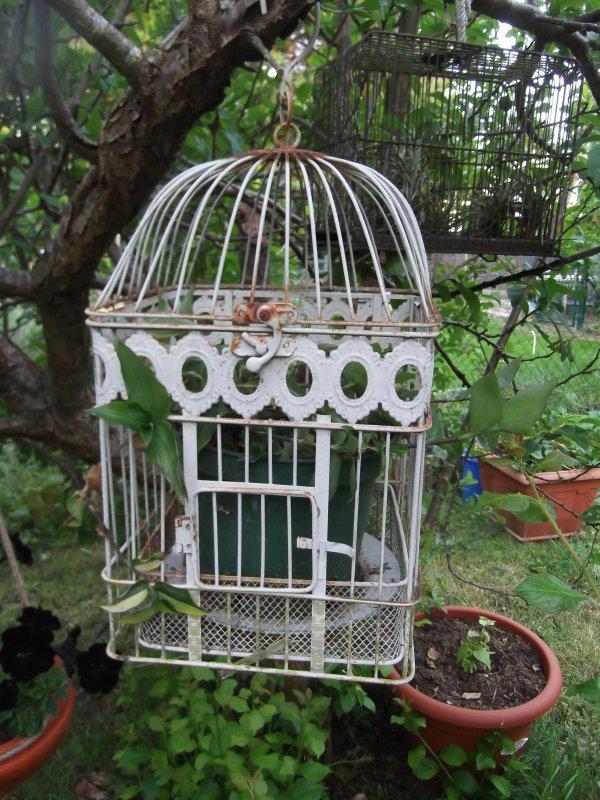 En cages!!