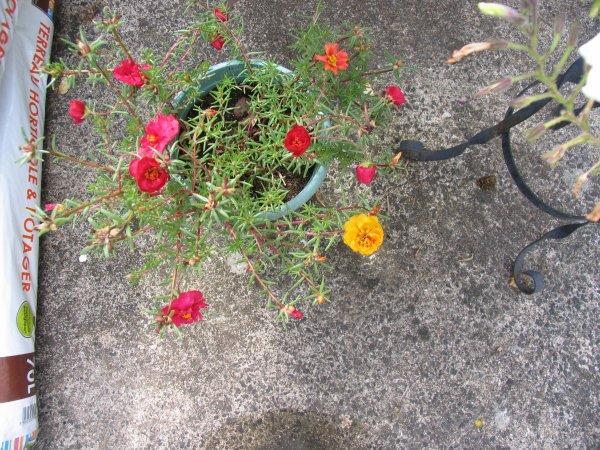 La pluie a bien nettoyé les plantes